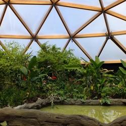 Amazonica Blijdorp Rotterdam
