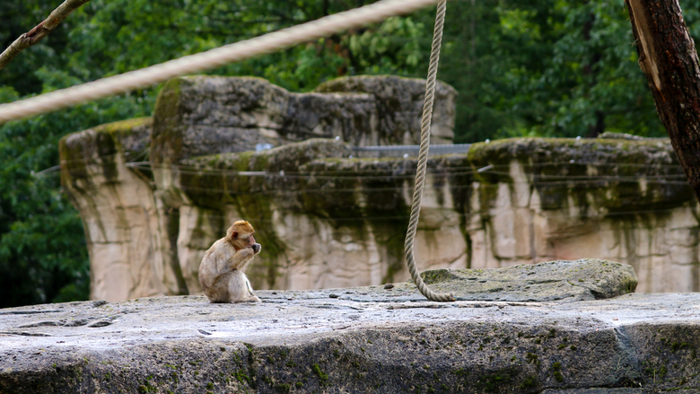 Lonely monkey -