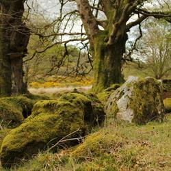 Mossige bossen, Ierland
