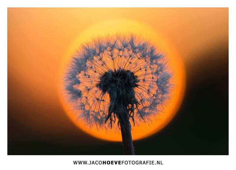 4W2A0103-JacoHoeveFotografie - Twee-in-één.<br /> <br /> Genomen op 10 mei 2017 tijdens de zonsondergang in Staphorst.