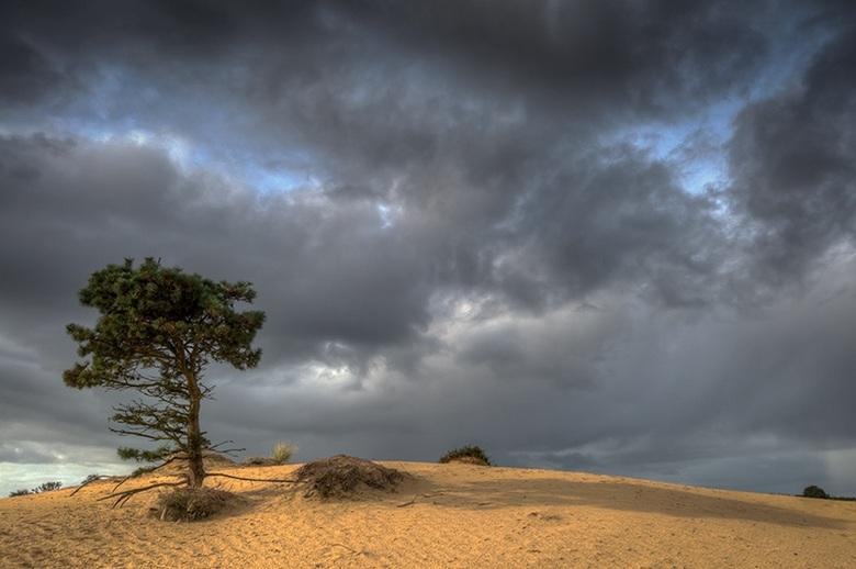 Lonely Tree - Aekingerzand, Friesland, Nederland