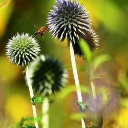Insecte-tuin geerbos