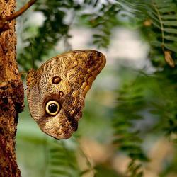 Vlinder nr.2