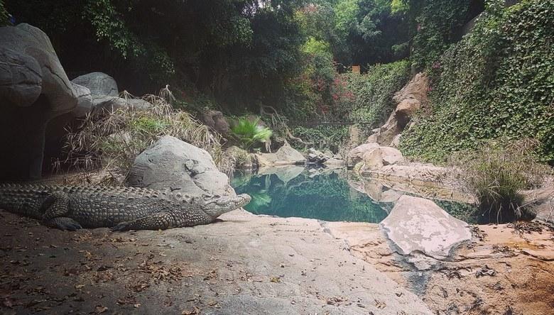 tropical crocodile  - mooie shot kunnen nemen van een grote krokodil, hij zat net perfect voor dit mooie plaatje te nemen