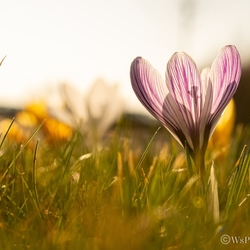 Voorjaar in zeeland