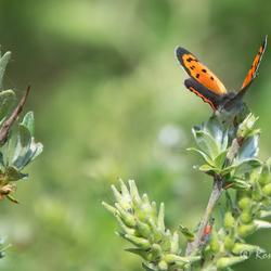 Vlindertijd