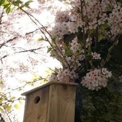 Birdhouse in spring
