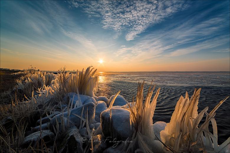 Bevroren riet - Een mooie maar zeer koude ochtend.