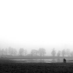 Misty Horses