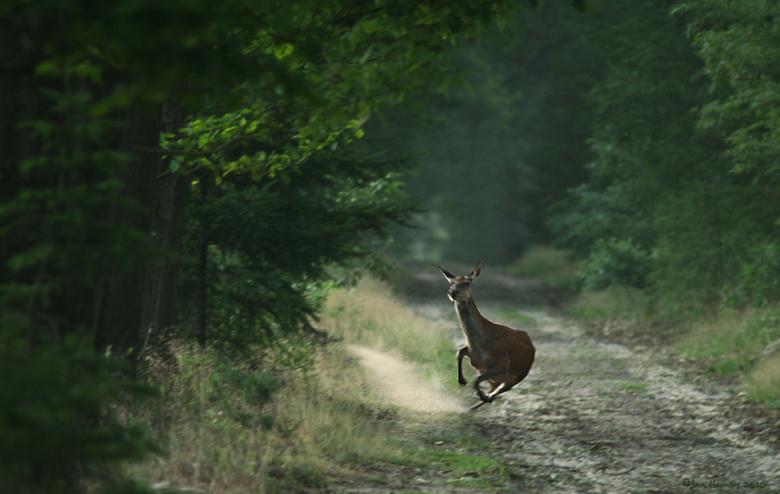 Actie!!! - Nog eentje uit Juli van dit jaar.<br /> Het was s&#039;morgens om 6.48 uur toen ik uit de struiken een hinde zag komen.<br /> Omdat ik ni