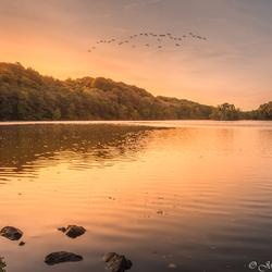 Cranenweyer herfst zonsopkomst vogels