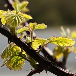 Eindelijk voorjaar