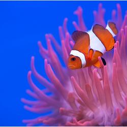 Finding Nemo II