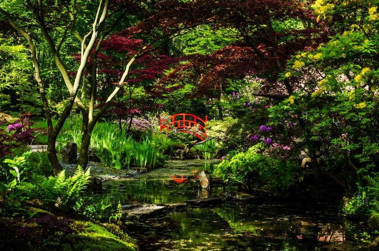 Japanse Tuin.jpg - Genomen in de japanse tuin in Den Haag( Clingendael). Op de laatste dag dat het open was  dit seizoen.