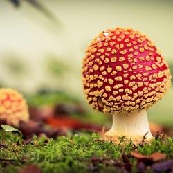 Macro paddenstoel