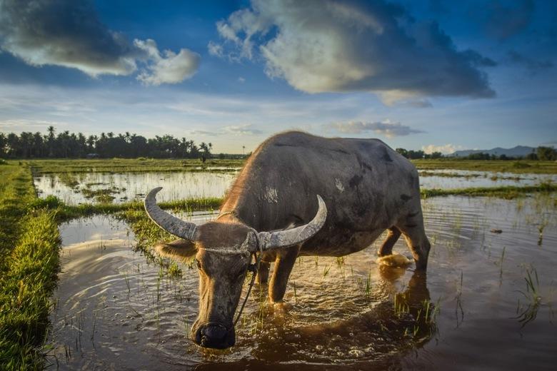 Ontmoeting in de rijstvelden
