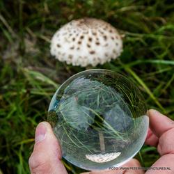 Mushroom in globe