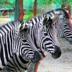 Zebra Zoo Blijdorp Rotterdam 3D
