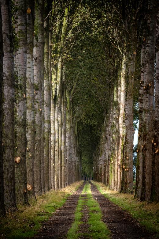 Bomenkathedraal - De architectuur van de natuur is vaak prachtig