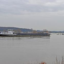 Hoog water -  Maas bij Neer.
