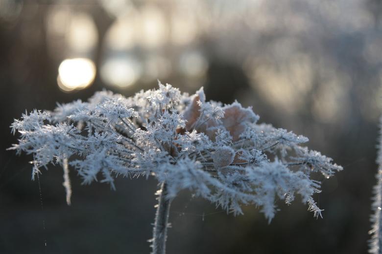 Koude Herfstochtend - Op de koudste herfstochtend van deze eeuw maakt de rijp een mooi tafereel voor de zon.