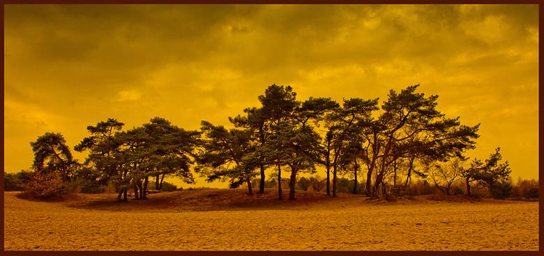 Drunense duinen - .