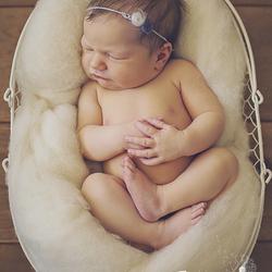 Newborn Lynn