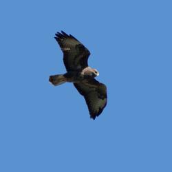 De jager in vrije vlucht
