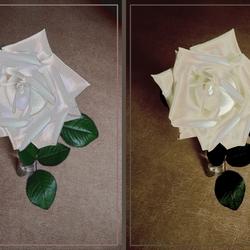 Rosesroses