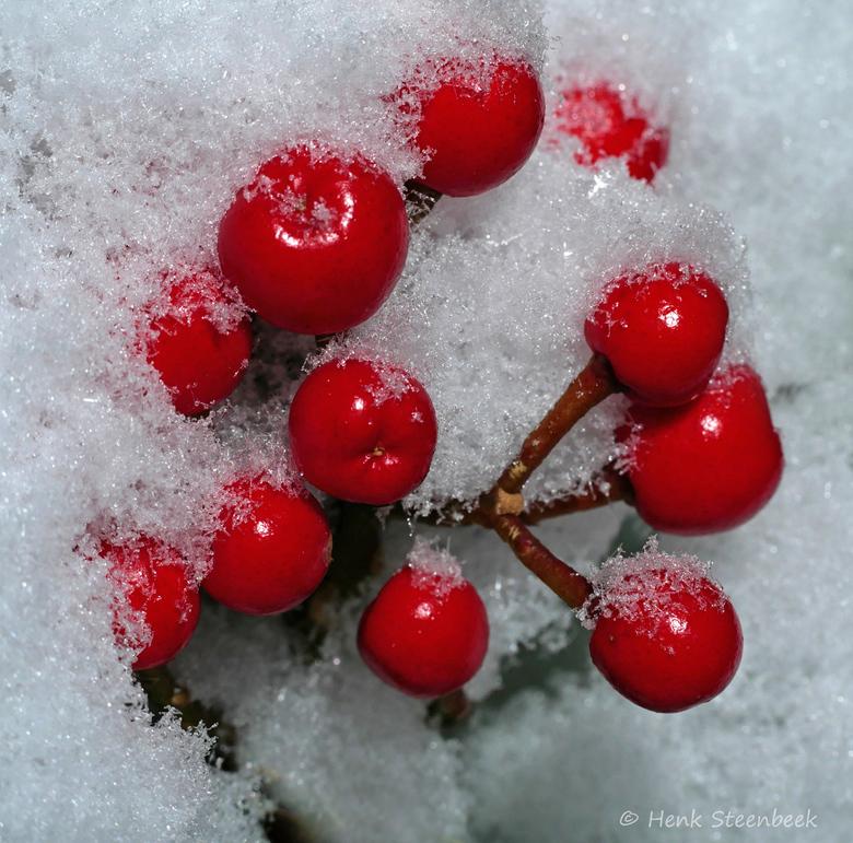 besjes in de sneeuw - En toen was er sneeuw. De sneeuw bleef helaas niet lang liggen dus het was even doorwerken om mooie fotos te maken.