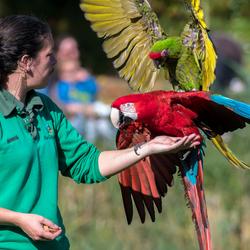 vogelshow avifauna