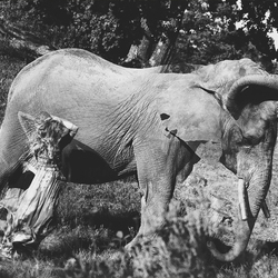 Beweging olifant en meisje