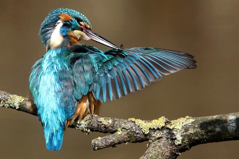 Verzorging - Ijsvogels fotograferen is een 100% pure natuurbelevenis.