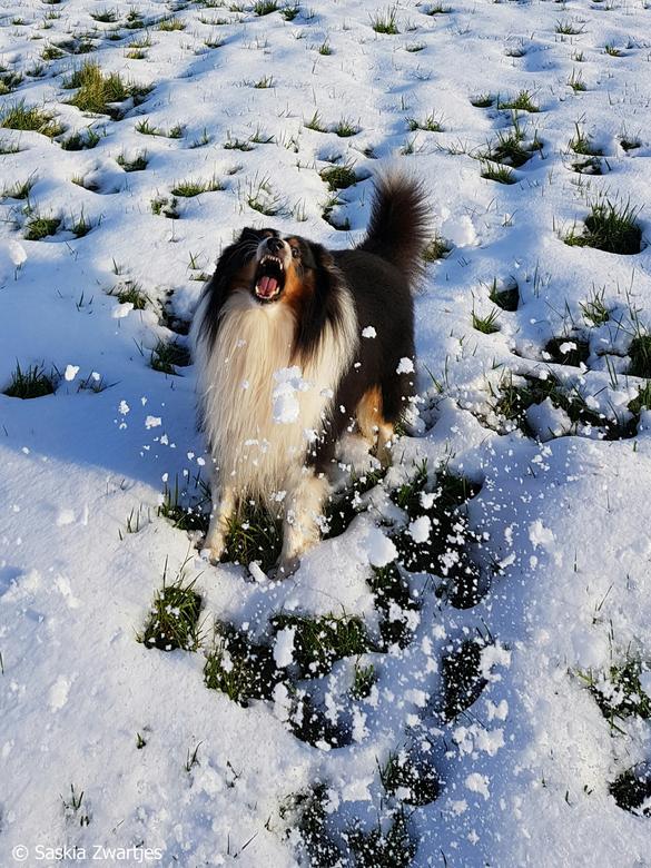 Happen naar de sneeuw -