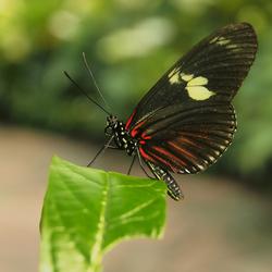 nog maar een vlindertuintje