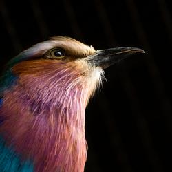 Kleuren van de regenboog vogel