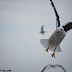 Flying for food