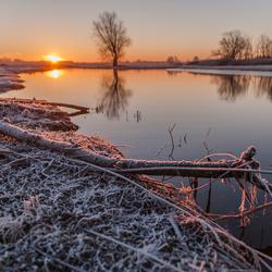 Koude ochtend in de Biesbosch