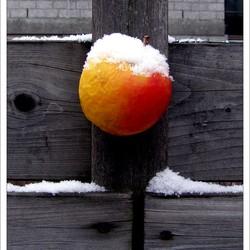 Appel aan een spijker en sneeuw