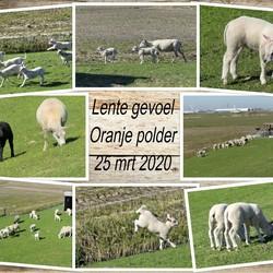 collage lente gevoel Oranje polder 25 mrt 2020