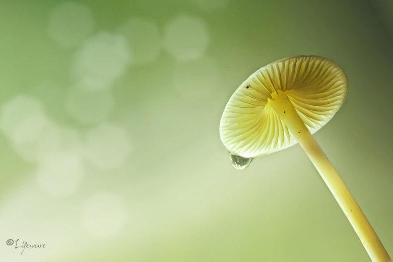 Mushroom - .........