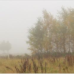Bomen in de mist (2)