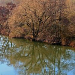bomen weerspiegeld