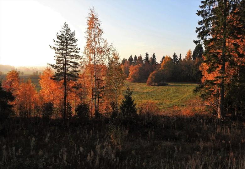 herfst - een paar weken geleden was de herfst nog prachtig met mooie volle kleuren .<br /> nu alweer alles kaal en winters dus weinig kleur meer.<br