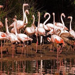 De temperamentvolle Flamingo dansers.
