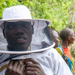 The Bee-man