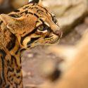 Toplocaties voor dierenfoto