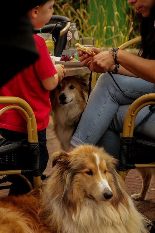 hond in de pot vinden? | straatfotografie foto van kees-vianen | zoom.nl