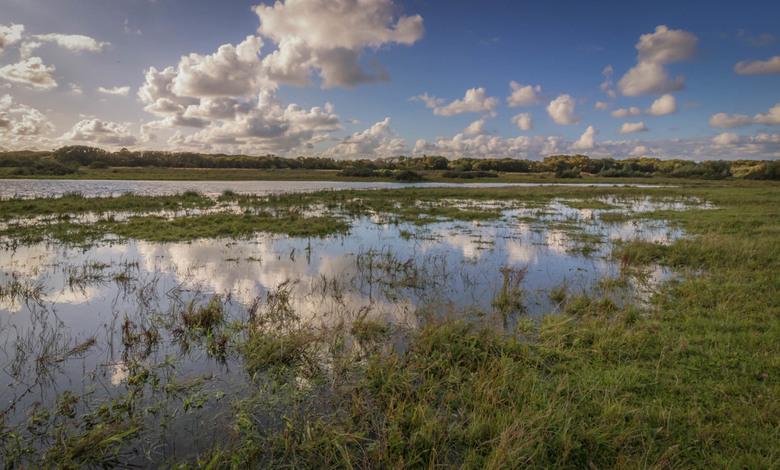 Reflections in Dutch Grasslands