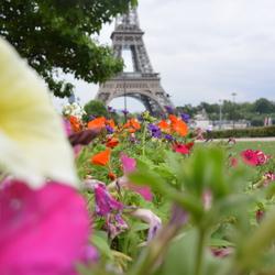 In de bloemen